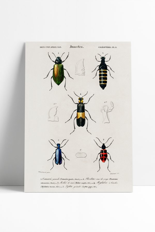 Poster Vintage Insects