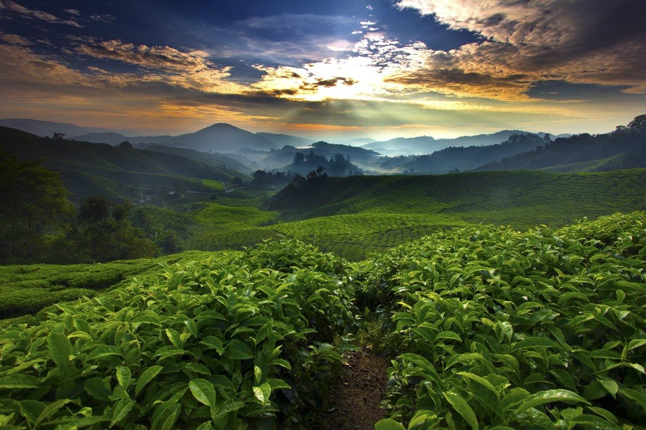 Brazuca Coffee Brasil